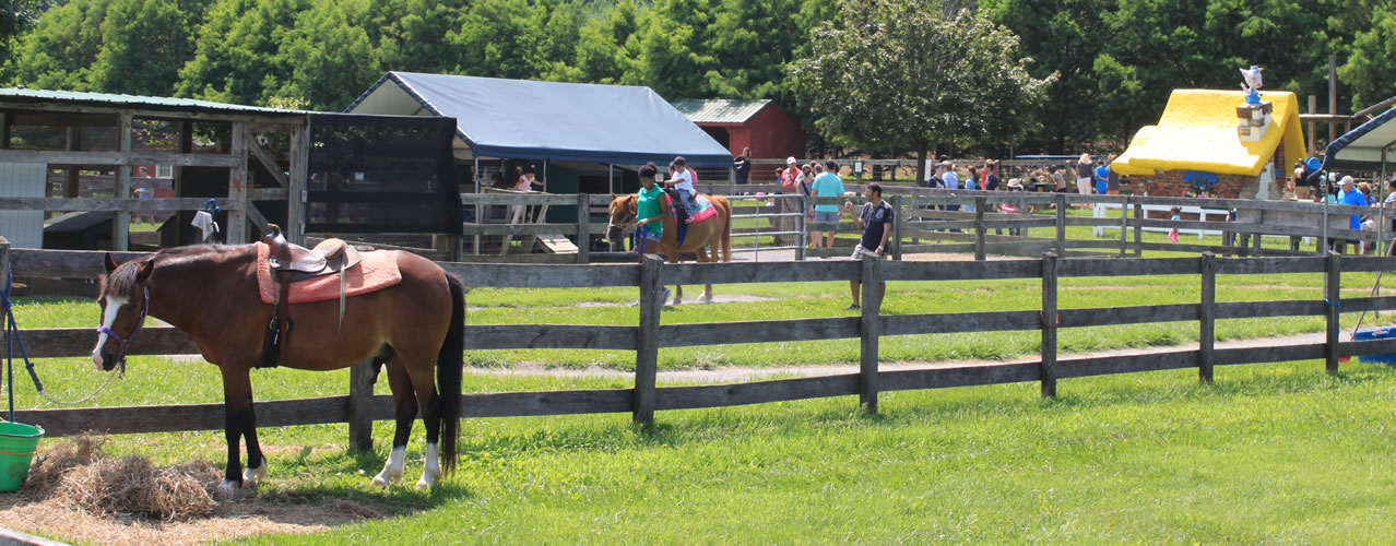 Horse and pony rides through the farm